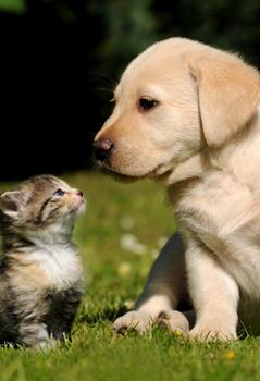 Cani e gatti<br/>ammessi