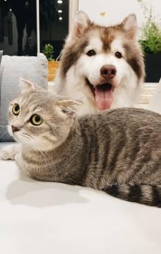 Perros<br> y gatos