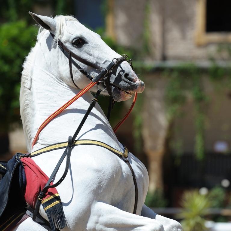 Equestrian Cordoba
