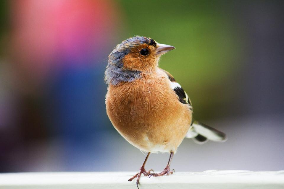 Turismo ornitológico en Soria