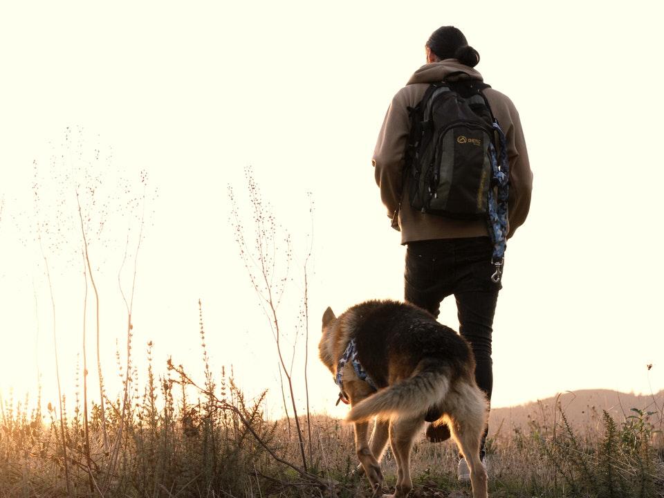 Rutas con perros en la Montaña Palentina