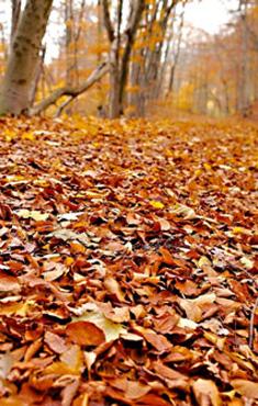 Moncayo en otoño