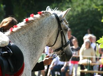 Carthusian horses show
