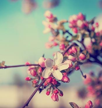 Sempre Primavera